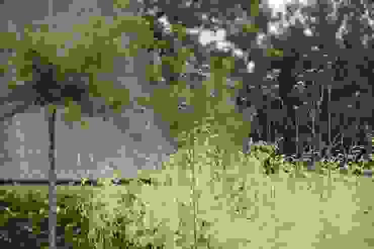 Grassen Moderne tuinen van Ontwerpstudio Angela's Tuinen Modern