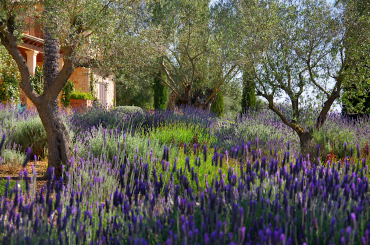 Сад в средиземноморском стиле от Viveros Pou Nou Средиземноморский