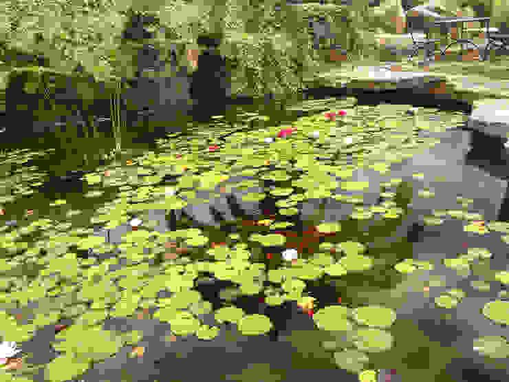 Jardins mediterrânicos por Viveros Pou Nou Mediterrânico