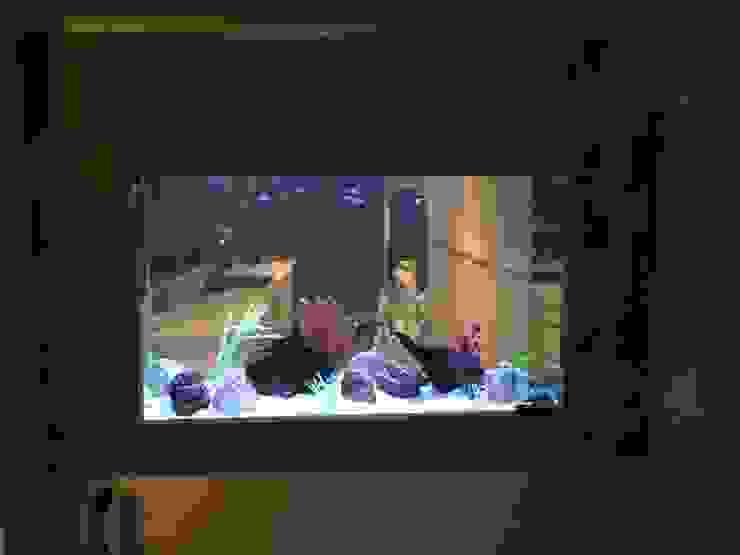 Aquarium in wall North Queens Ferry Modern living room by DC Aquariums Modern