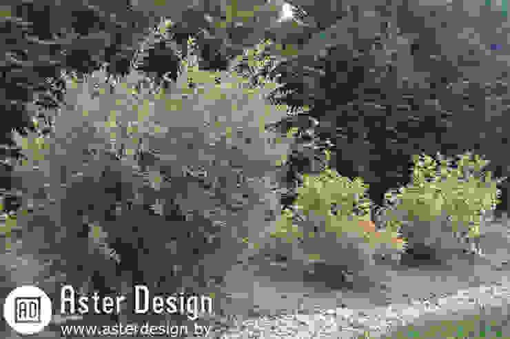 Aster Garden สวน