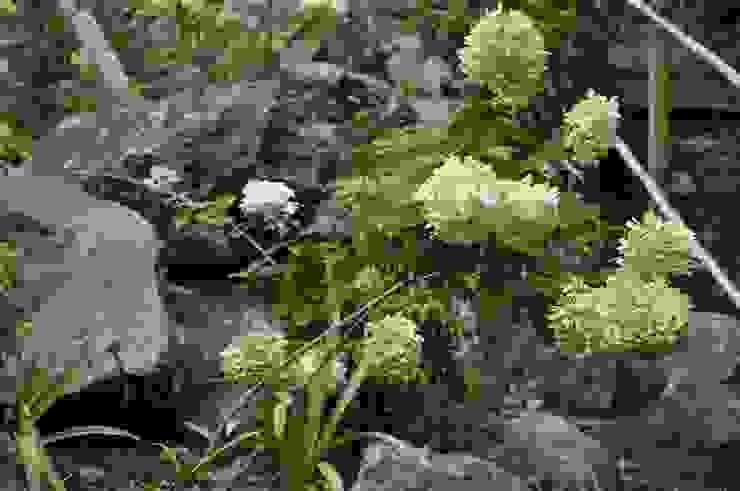 ノリウツギ オリジナルな 庭 の 有限会社 温室 オリジナル