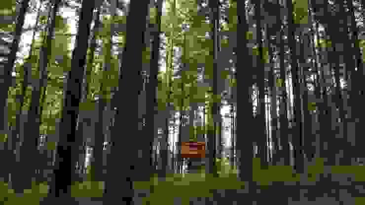 Cabañas en los árboles Hotéis escandinavos