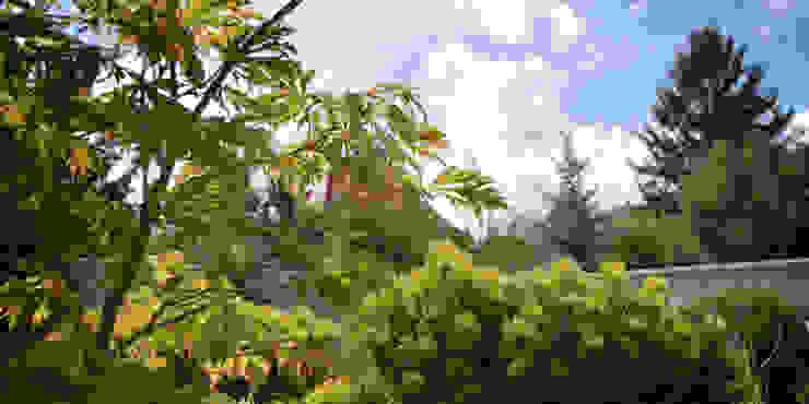 kosodrzewiny i klon japoński od Autorska Pracownia Architektury Krajobrazu Jardin Nowoczesny
