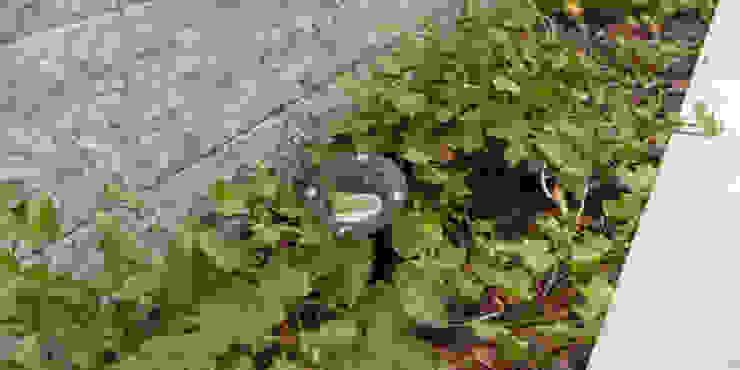 dzięki ukrytym reflektorom w nocy ogród nabiera nieco tajemniczego charakteru od Autorska Pracownia Architektury Krajobrazu Jardin Nowoczesny