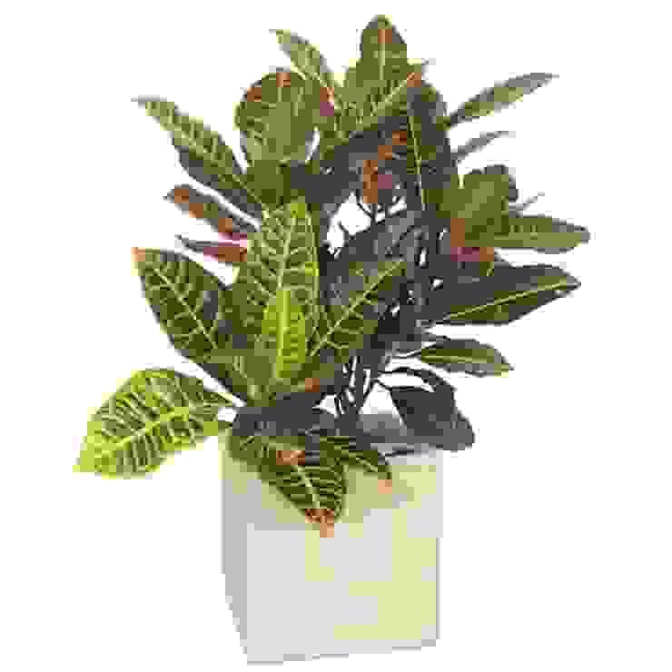 """Las Plantas de """"Tu jardín"""":  de estilo  por Flores & Regalos Tu jardin ,Tropical Fibra natural Beige"""