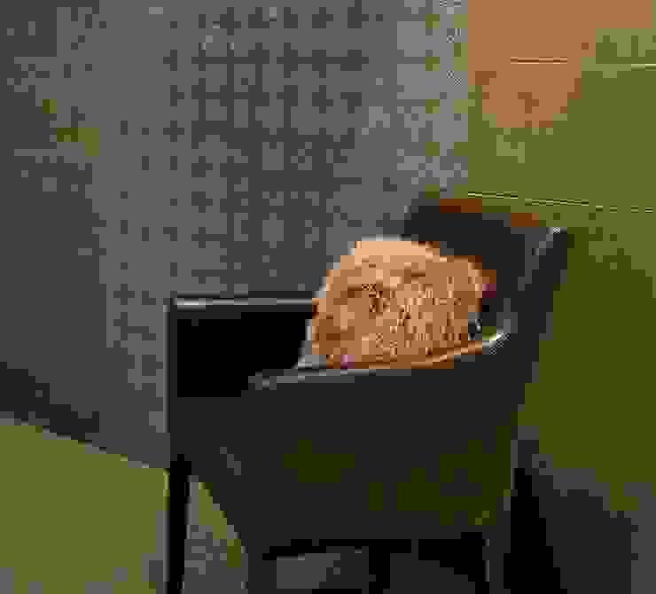 INTERAZULEJO Dinding & Lantai Modern