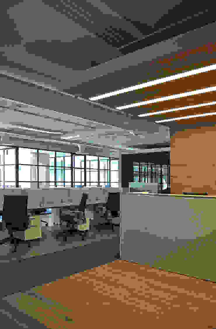 Recepción en madera y detalle de iluminación en Newmat de DF ARQUITECTOS Moderno