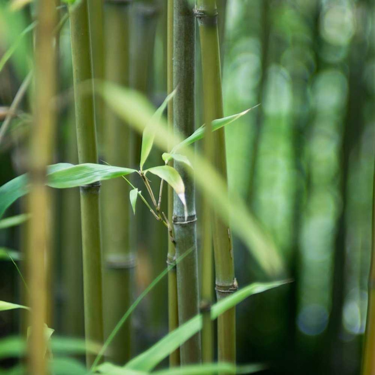 Bamboo Asian style garden by Best4hedging Asian