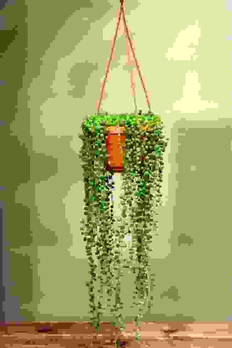 Senecio rowleyanus bitki dekor Tropikal