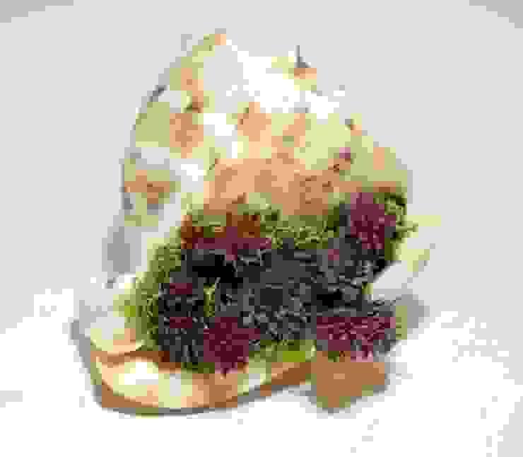 Deniz kabuğunda sempervivum bitki dekor Tropikal