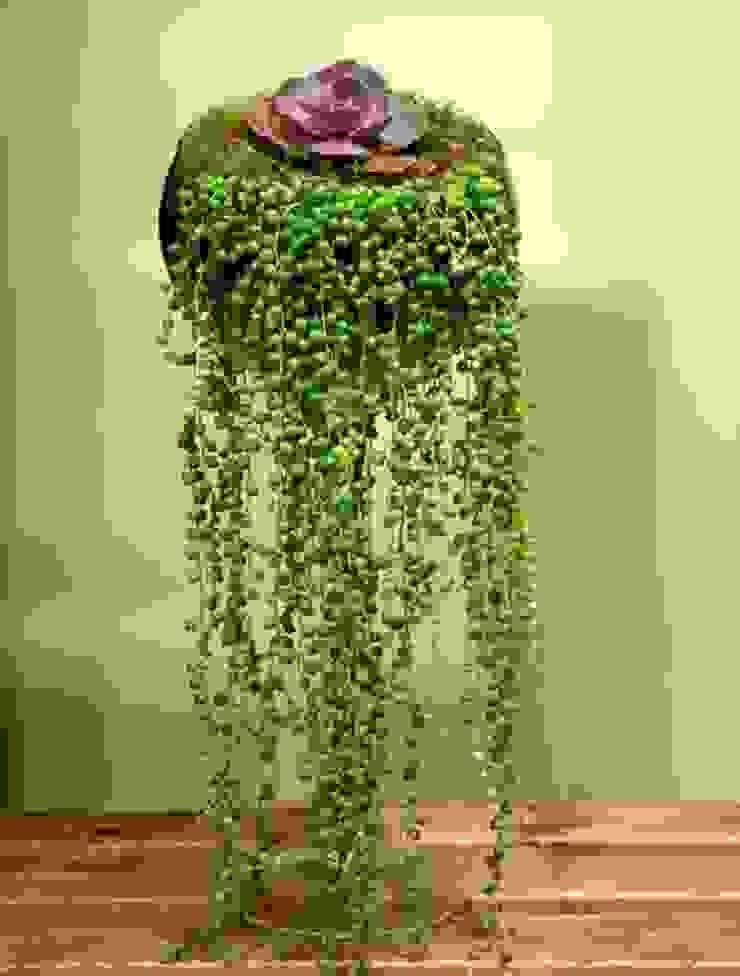 Sukkulent şelalesi bitki dekor Tropikal