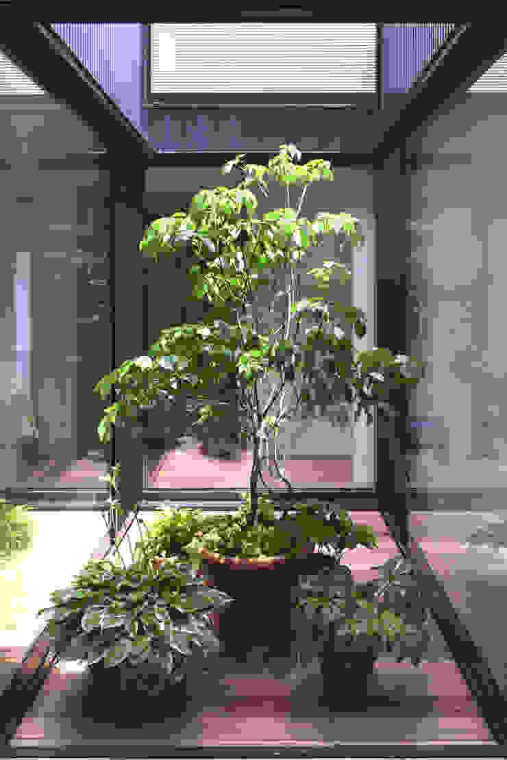 光庭と植物 モダンな庭 の FURUKAWA DESIGN OFFICE モダン
