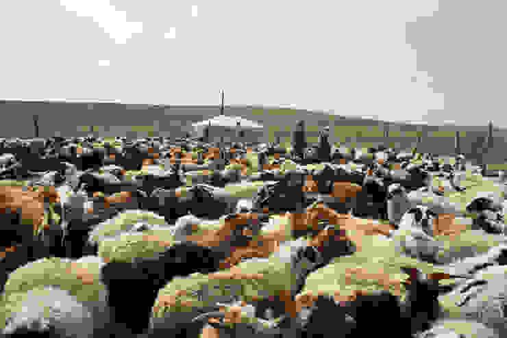 Filzschuhe aus Mongolei van esgii Landelijk