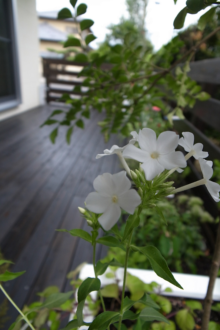 T's Garden Square Co.,Ltd. Asiatischer Garten