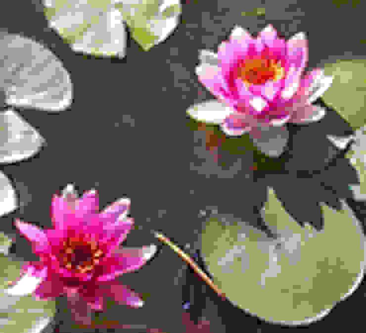 nenufares  :  de estilo  por Water Life S.A,Tropical