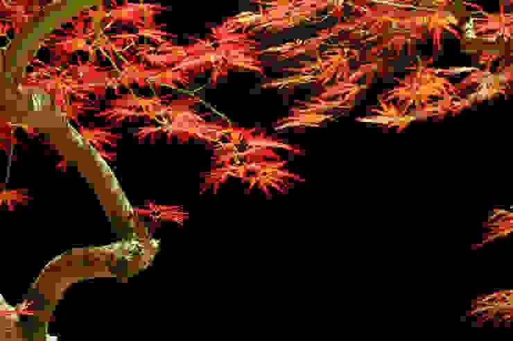 garden M8 モダンな庭 の 山越健造デザインスタジオ Kenzo Yamakoshi Design Studio モダン