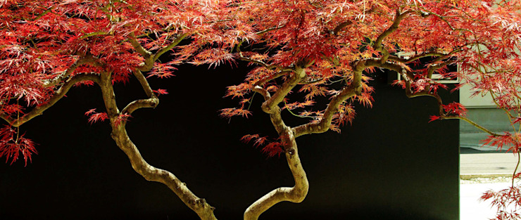 garden M9 モダンな庭 の 山越健造デザインスタジオ Kenzo Yamakoshi Design Studio モダン