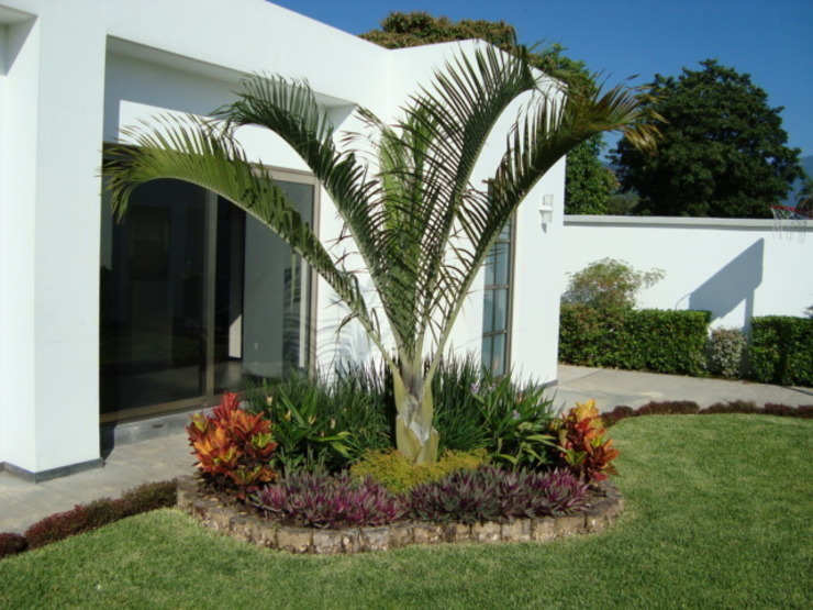 Tropical style gardens by Vivero Sofia Tropical