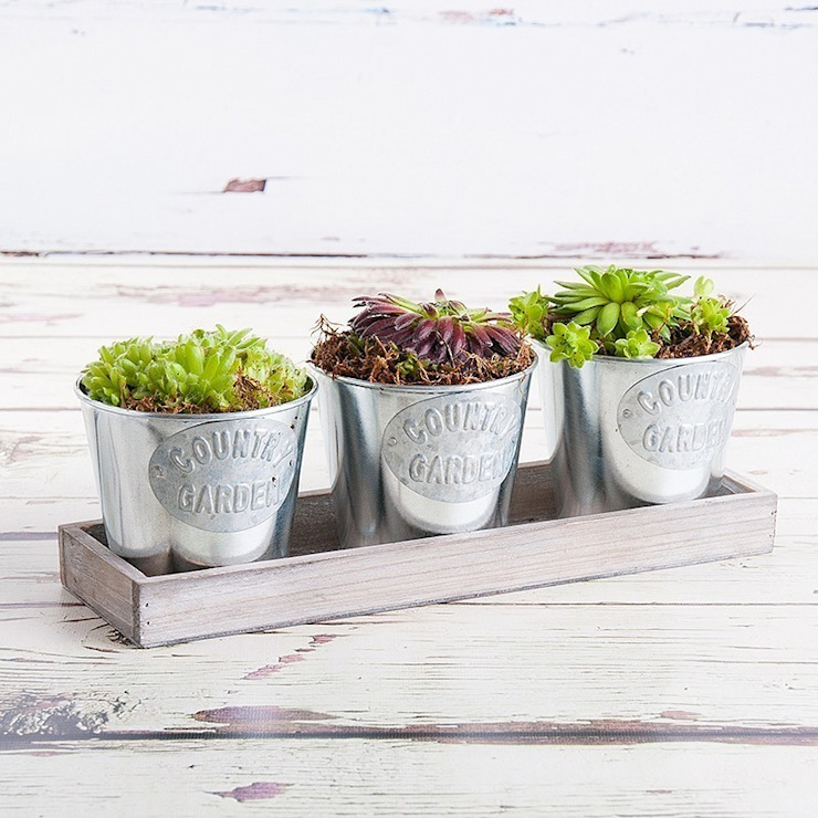 Summer Trio Planter de Appleyard London Moderno