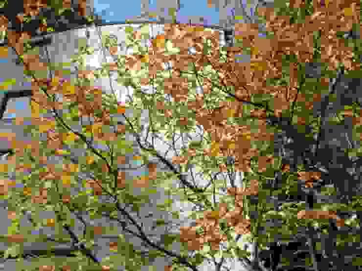 ジューンベリーの紅葉 モダンな 家 の MA設計室 モダン