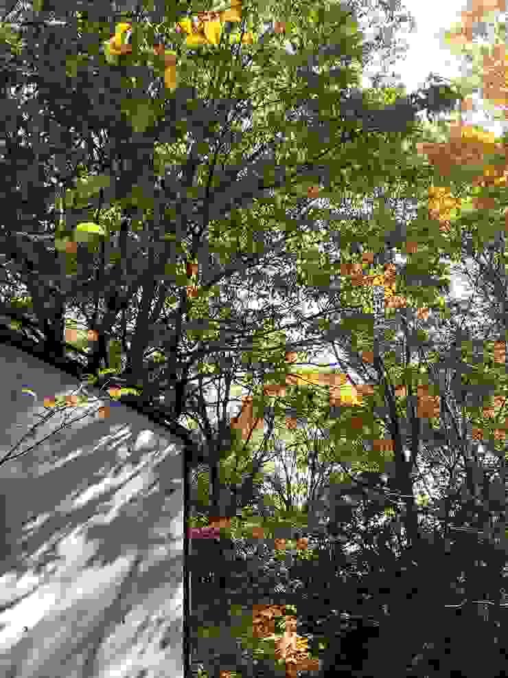 中庭から(秋) モダンな庭 の MA設計室 モダン