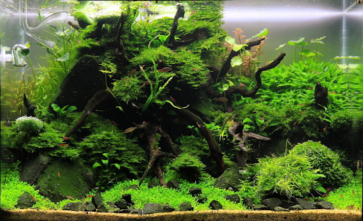 Aquasabi Interior landscaping