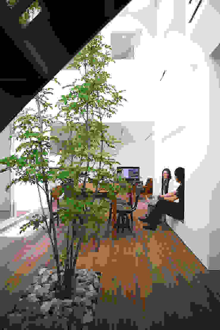 室内に植えられたシマトネリコ モダンデザインの ダイニング の スターディ・スタイル一級建築士事務所 モダン