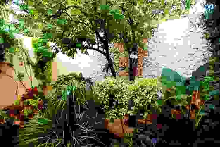 Patio Amarillo Taller Estilo Arquitectura Jardines de estilo moderno
