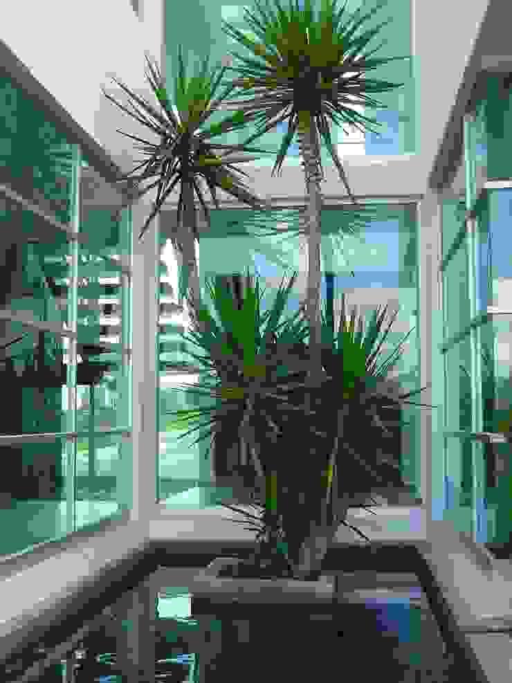 Cantemual Jardines modernos de SANTIAGO PARDO ARQUITECTO Moderno