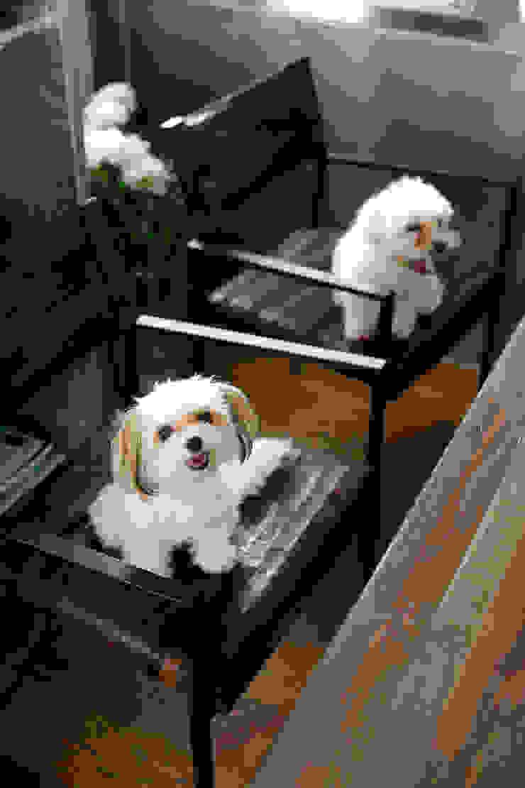 dogs の 株式会社スタイル工房