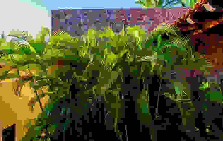 Casa Tortugas Jardines de estilo tropical de BR ARQUITECTOS Tropical