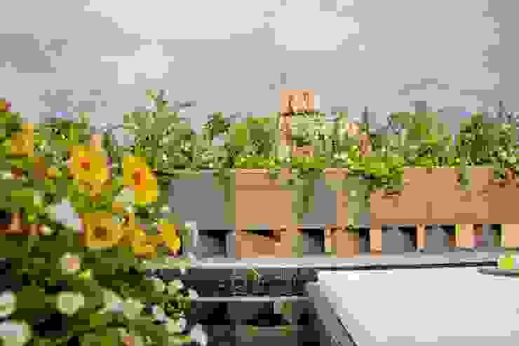 Flor de Mayo Hotel & Restaurant Jardines modernos de Elías Arquitectura Moderno