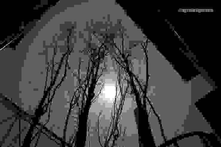 中庭から月を見る モダンな庭 の アグラ設計室一級建築士事務所 agra design room モダン