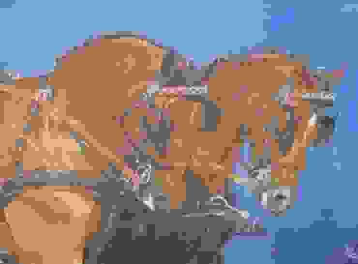 Voor de koets van www.paardenschilderijen.com Klassiek