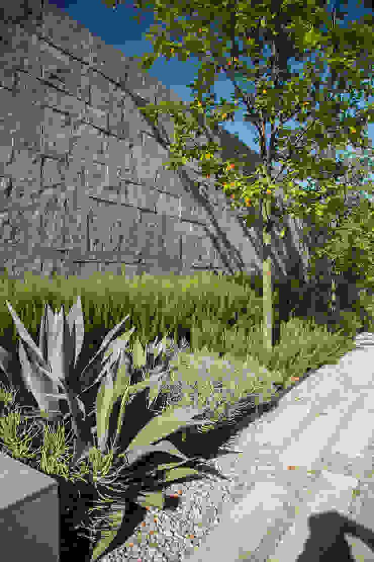 RESIDENCIA JAGUARUNDI Jardines modernos de HARARI LANDSCAPE Moderno
