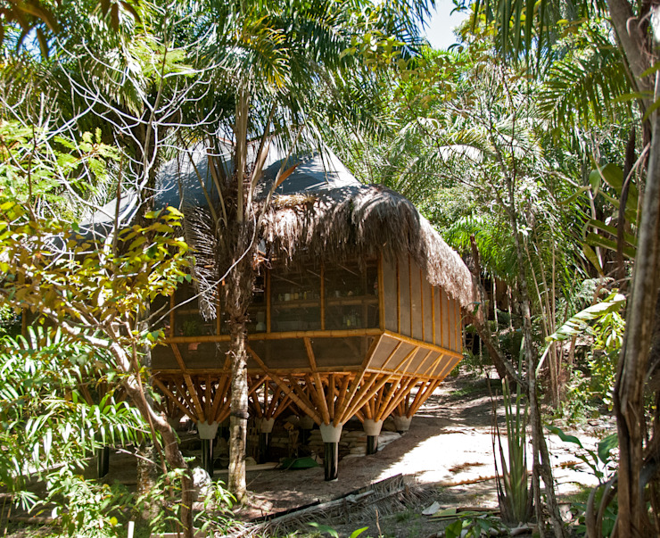 Tropical style study/office by IR arquitectura Tropical Bamboo Green