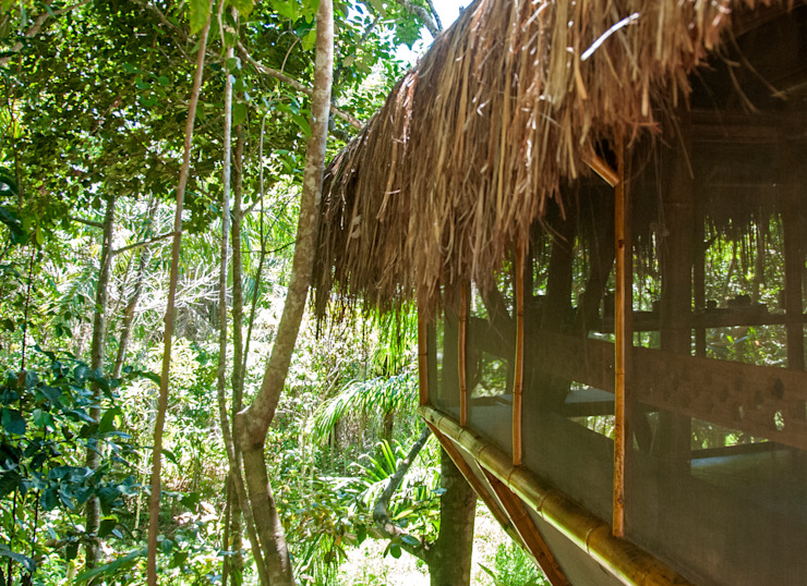 Tropical style houses by IR arquitectura Tropical Bamboo Green