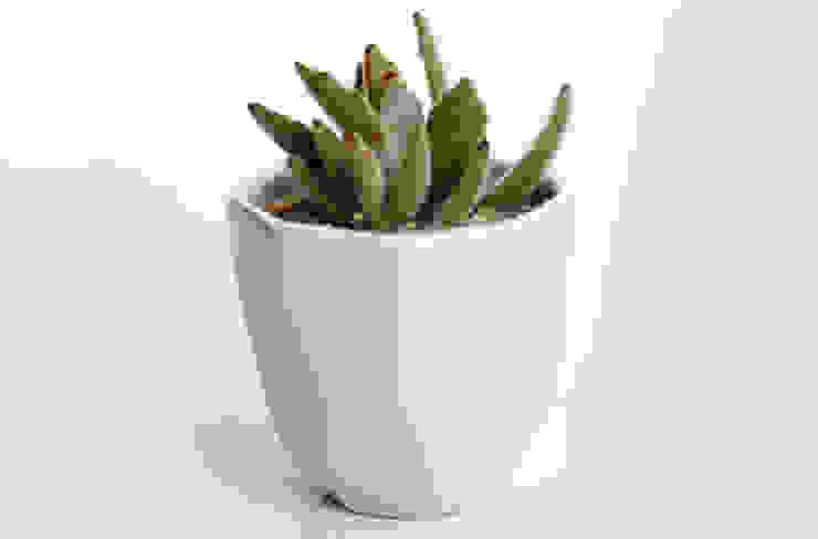 Suculenta en maceta de cerámica de Kentia Decosustentable Minimalista Cerámica