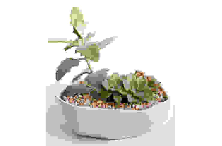 Paisaje en maceta de cerámica de Kentia Decosustentable Minimalista Cerámica
