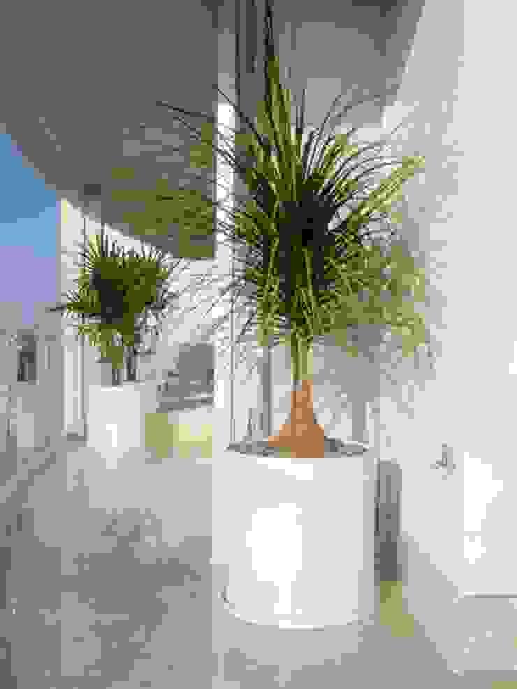 Macetas Jardines modernos de Tropical America landscaping Moderno