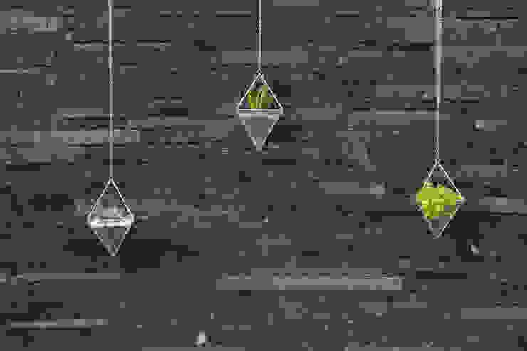 Terrarios Lorenza Casas modernas de Fractales Moderno