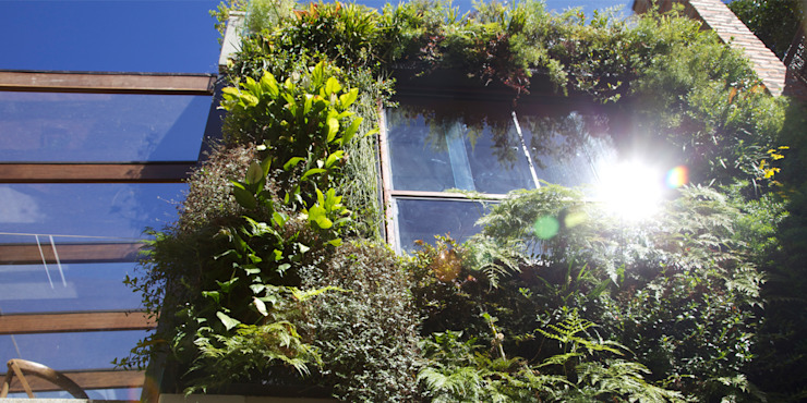 Jardim Vertical Paredes e pisos tropicais por Ecoeficientes Tropical