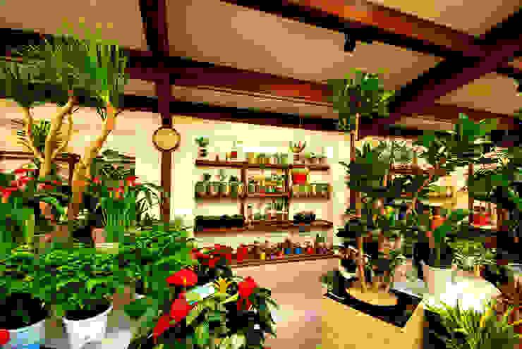 ゆくはし 植物園 の 一級建築士事務所 馬場建築設計事務所 和風 木 木目調