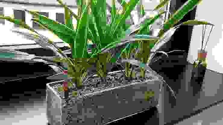 euflora Begrünungskonzepte의 에클레틱 , 에클레틱 (Eclectic) 유리