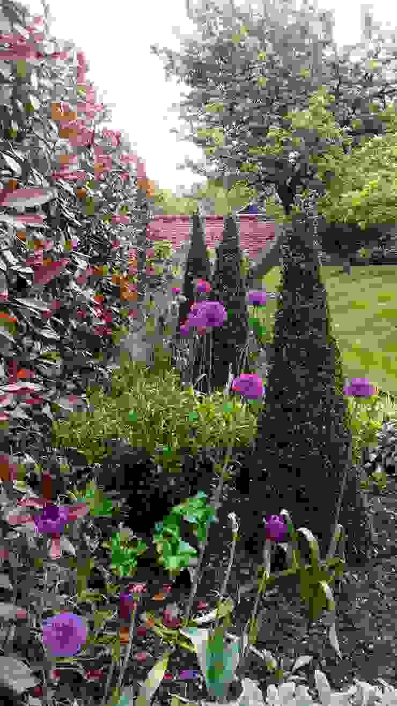 Felsted Place Minimalist style garden by Aralia Minimalist Bamboo Green