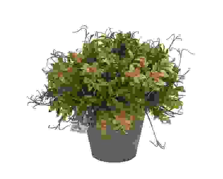 Растение в горшке V240 от LeHome Interiors Классический Пластик