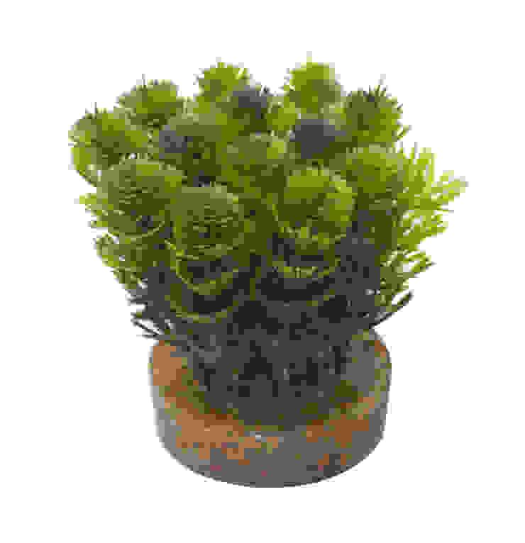 Растение V402 от LeHome Interiors Классический