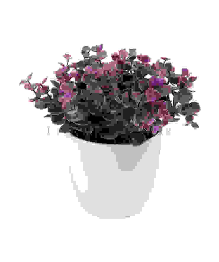 Растение в горшке V550 от LeHome Interiors Классический