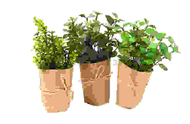 Растения в горшке (набор из 3-х шт) V919 от LeHome Interiors Классический